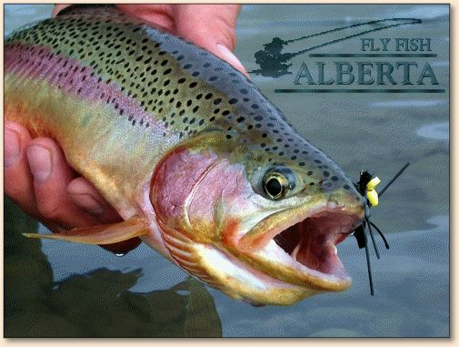 Fishing on pinterest fly fishing fish and summer wallpaper for Golden trout fishing