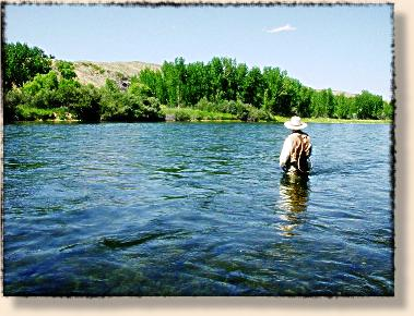 Bighorn river 39 s hot fishing in low water conditions fly for Bighorn river fly fishing
